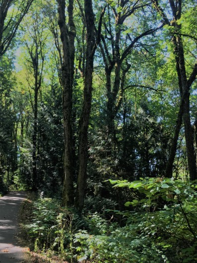 Tryon forest bathing